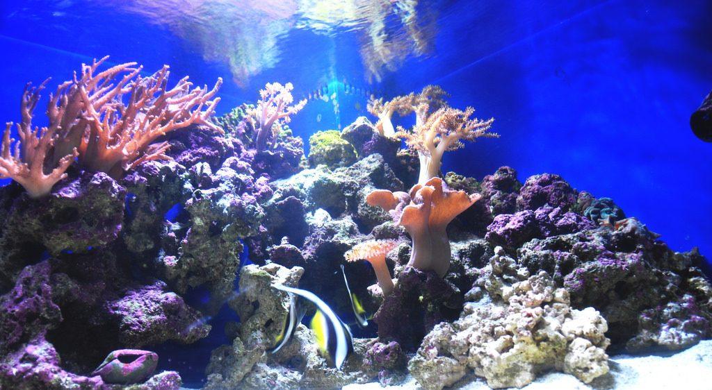 akuarium ikan dan koral hias air laut