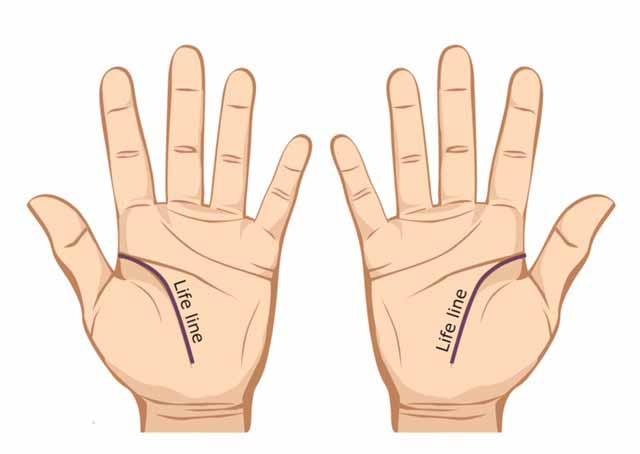 Garis tangan kehidupan - palmistry