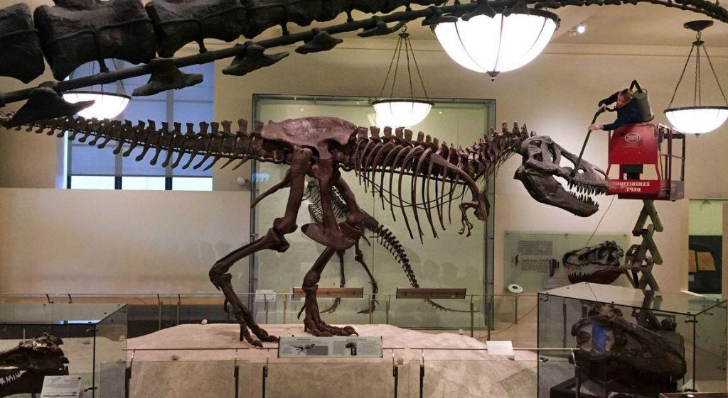 gambar fosil t-rex