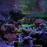 aquarium laut tanpa skimmer