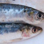 Ciri-ciri Ikan Segar dan Bagaimana Cara Memilihnya