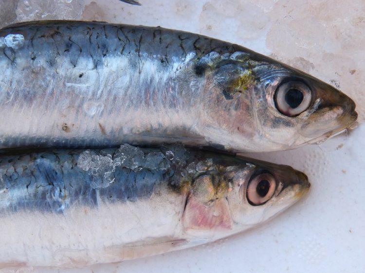 ciri-ciri ikan segar dan bagaimana memilihnya