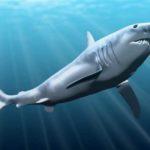 Mengenal Megalodon: Hiu Raksasa dari Masa Lalu