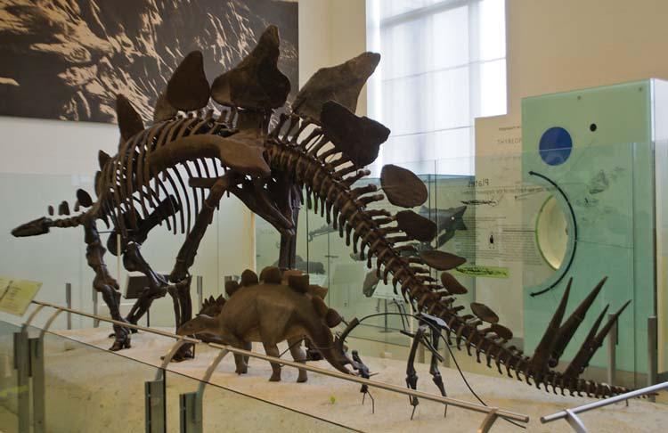 Dinosaurus herbivora - Stegosaurus