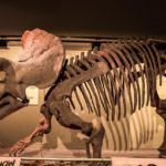 7 Dinosaurus Herbivora Paling Dikenal