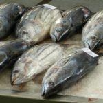 10 Cara Menghilangkan Bau Amis Ikan Dengan Mudah
