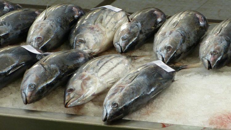 cara membersihkan bau amis ikan