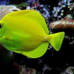10 Jenis Ikan Hias Air Laut yang Mudah Dipelihara