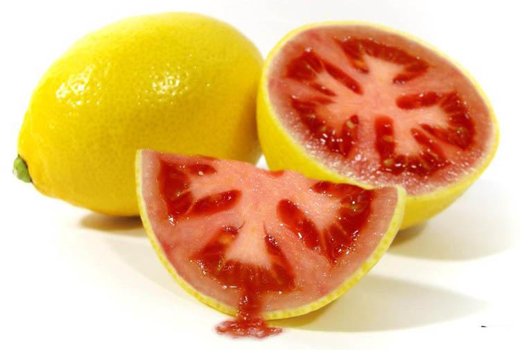lemato - buah hybrid