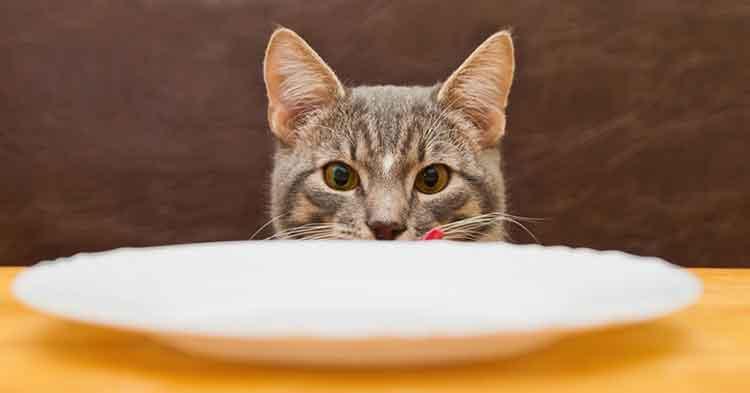 penyakit-diabetes-kucing