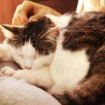 5 Penyakit Kucing yang Berbahaya dan Mematikan