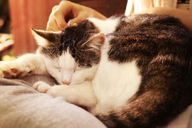 penyakit-kanker-pada-kucing