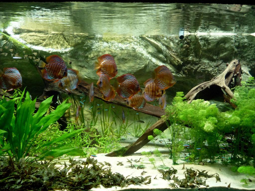 tanaman akuarium air tawar
