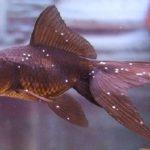 Cara Mudah Mengatasi White Spot pada Ikan di Akuarium