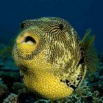 10 Ikan Paling Berbahaya yang Sebaiknya Dihindari