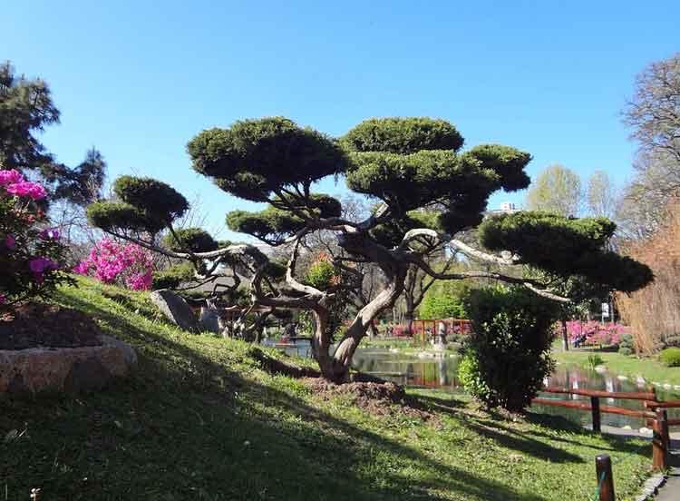 Taman Bergaya Jepang 2