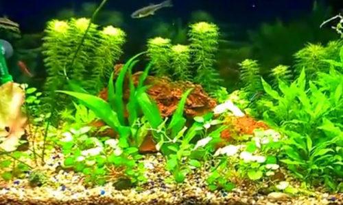 ikan dalam akuarium