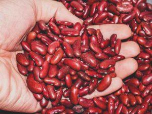 manfaat kacang merah untuk kesehatan