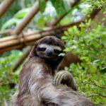 10 Hewan Langka yang Terancam Punah di Dunia