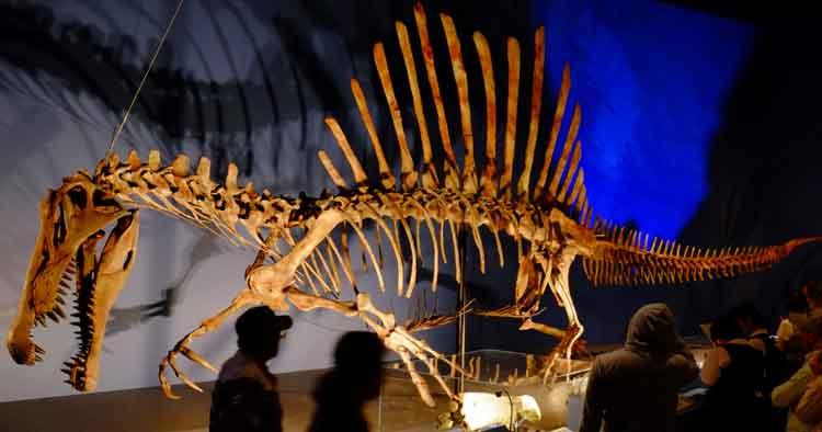 Fosil Spinosaurus