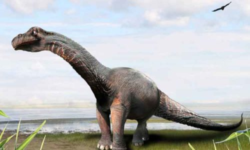 fakta gambar brontosaurus