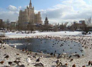 kebun binatang moskow