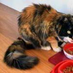 15 Makanan Manusia yang Berbahaya untuk Kucing