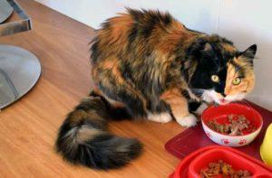 makanan berbahaya untuk kucing