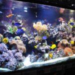 8 Cara Memelihara Ikan Hias Air Laut untuk Pemula