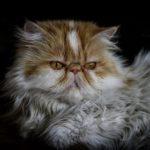 8 Manfaat Memelihara Kucing di Rumah