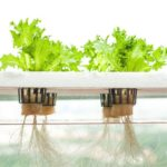 Metode Hidroponik: Cara Berkebun Tanpa Lahan